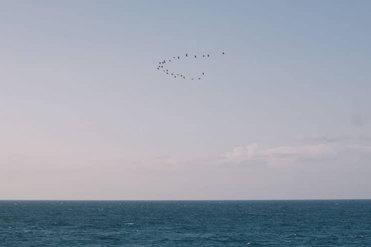 merit kuşlar